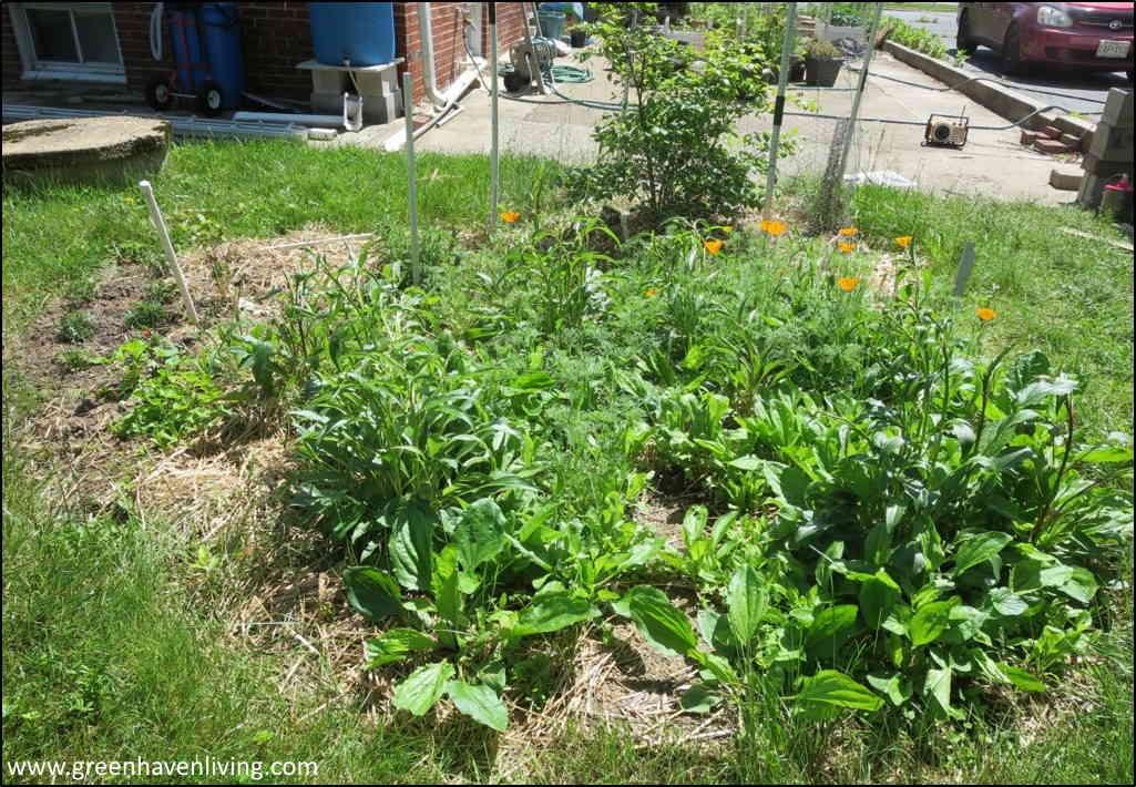 Freeform herb garden