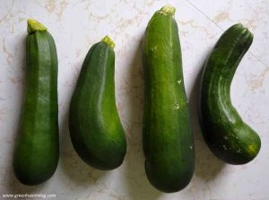 zucchini harvest fourth of july
